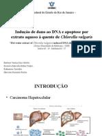 Indução de apoptose e dano de DNA por extrato aquoso à quente de Chorella vulgaris