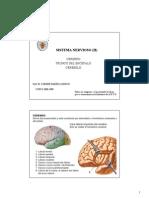 Sistema Nervioso (II)