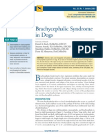 Brachycephalic Syndrome in Dogs