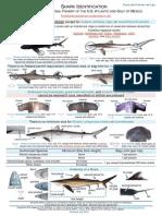 Shark Identification