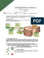 TALLERE_Tejidos vegetales.pdf