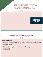 Bakteri Patogen Pada Saluran Genetalia