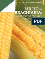 Sistema Consorciado Milho + Brachiária