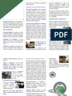 162519605-triptico-seguridad-vial-2011-141002180239-phpapp01