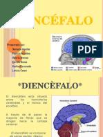 Diencefalo Exposicion 3 (1)