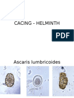 helminth-picture.ppt