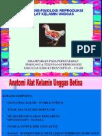 Anatomi Reproduksi UNGGAS Betina-2015