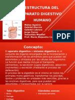 Estructura Del Aparato Digestivo