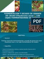 FERMENTACION Y SECADO DE GRANOS DE CACAO EN CAJAS FERMENTADORAS
