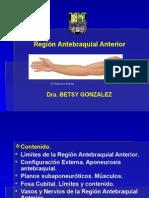 Tema # 8 Región Antebraquial Anterior y Lateral