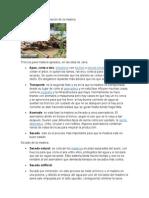 Producción y transformación de la madera.docx