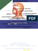tugas parmakologi respiratorik