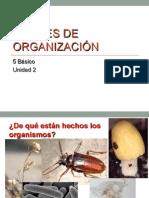 Niveles de Organizacion_ppt