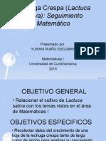 Lechuga Crespa (Lactuca Sativa) MATEMATICAS