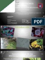 Microorganismos cultivables en sistemas acuaticos