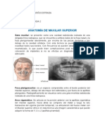 Anatomia Radiografica 2