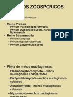 05 - Mucilaginosos