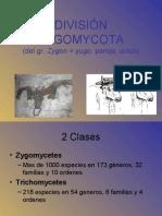 09 - ZYGOMYCOTA