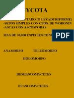 10 - Ascomycetes Intro