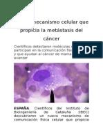 Hallan Mecanismo Celular Que Propicia La Metástasis Del Cáncer