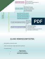 10.1 - Ascomycetes HEMI Jcb