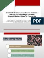 ENTEROCCUS-FAECIUM-..-MICROBIOLOGIA