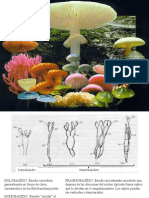 16 - Basidiomycota Micro de Macro