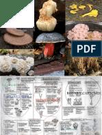 17 - Basidiomycota Macro de Macro