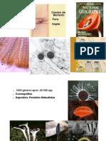 SANDRA Ascomycota09 2