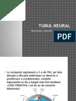 Tubul Neural