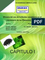 Diapositivas de Alga Elodea