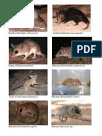 Checklist Mammalia Terrestre