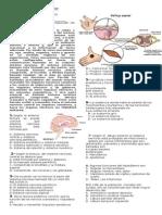 Evaluacion Sistema Nervioso Octavo 2015