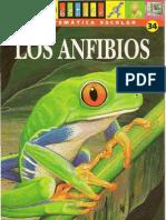 Los Anfibios