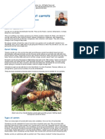 How to Grow Great Carrots by Jackie Clay-Atkinson