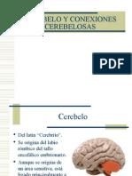 CEREBELO[1]