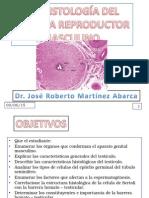 Histologia Del Sistema Reproductor Masculino