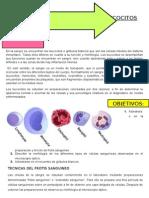 Observacion y Recuento de Leucocitos