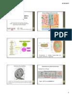 Citologia e Morfologia Bacteriana
