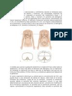 Cambios anatómicos y fisiologicos durante la gestación.docx