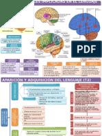 procesos neurolingüísticos esquemas