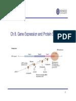 CH 8_Gene Expression_2015.pdf