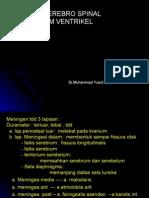 Ventrikel (LCS)