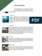 Animales Que Viven en La Glaciación