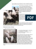 Producción de Cerdos Con Moringa