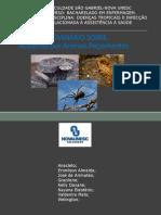 ue-acidentesporanimaispeonhentos-100109211105-phpapp01.pdf