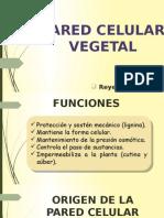 Pared Celulaar Vegetal