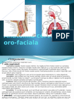ORL Curs I Anatomie cervico-oro-faciala.pptx