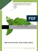 Proyecto Stevia Municipio de Acala Chiapas