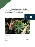 Maxito y Su Trabajo de La Marihuana